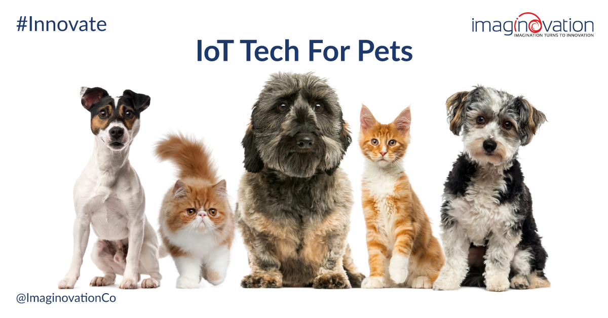Iot Devices for Pets