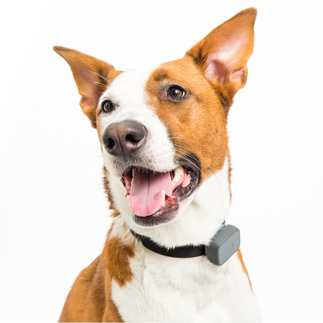 Iot Devices for Pets - Whistle GPS Tracker